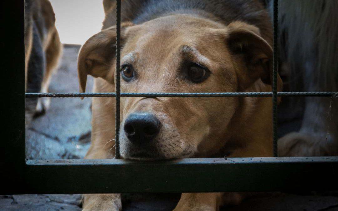 Lei Sansão: Maus-tratos de animais tem pena aumentada!